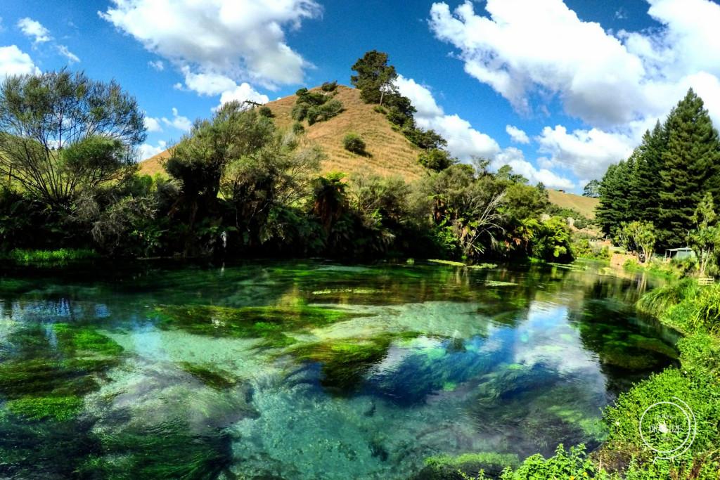 Nowa Zelandia - Na Nowej Drodze Życia (7)