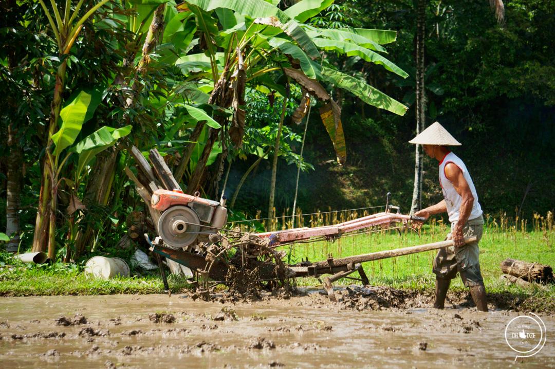 Bali – co warto zobaczyć. Ubud i okolice