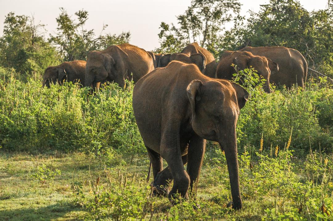 Sri Lanka co zobaczyć - Udawalawe