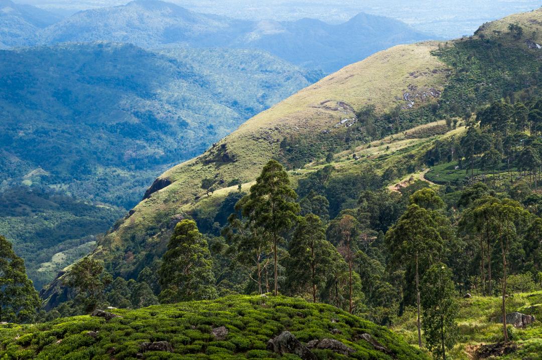Sri Lanka co zobaczyć -Haputale