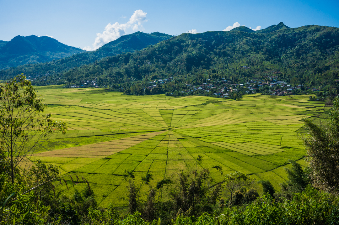 Flores co zobaczyć - Indonezja Tarasy ryżowe Cancar
