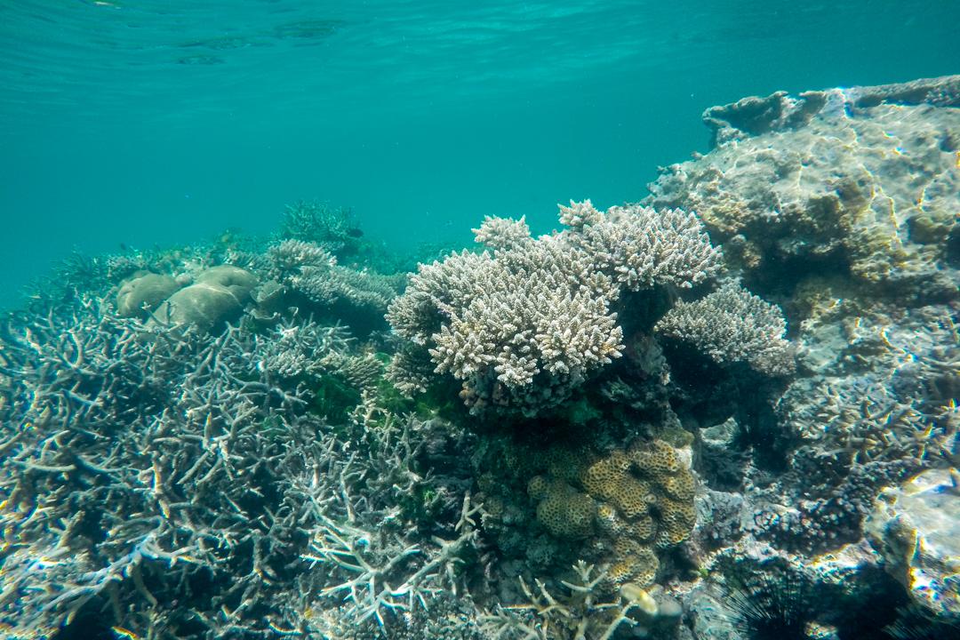 Karimunjawa w Indonezji - rafa koralowa