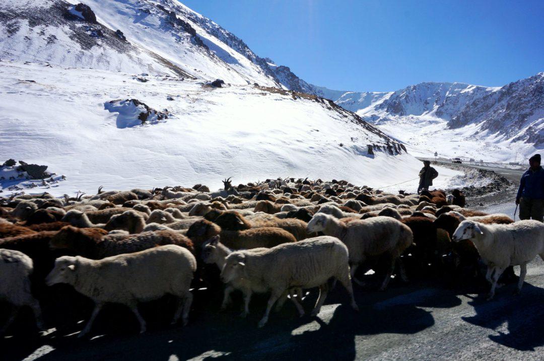Owce blokujące drogę. Autotop w Kirgistanie - Na Nowej Drodze Życia