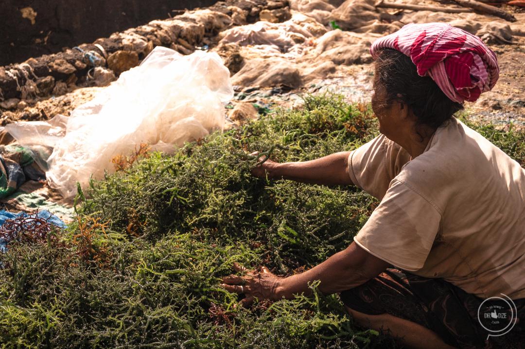 Nusa Penida - co zobaczyć? Hodowle alg