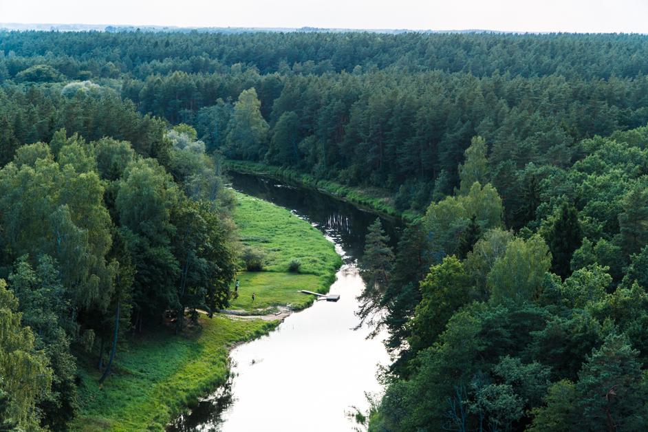 Litwa co zobaczyć - Tree Top Walk