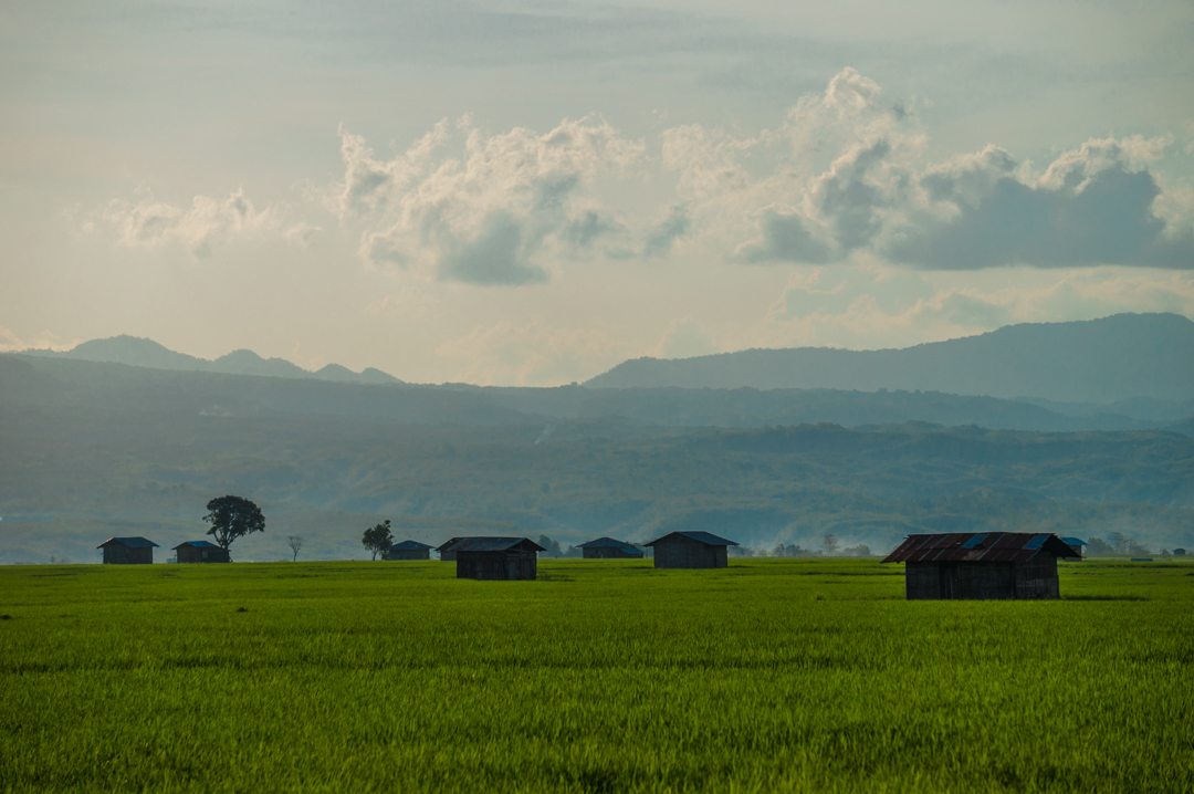 Uprawy ryżu w Indonezji - Na Nowej Drodze Życia